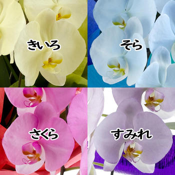 miyabi1.jpg