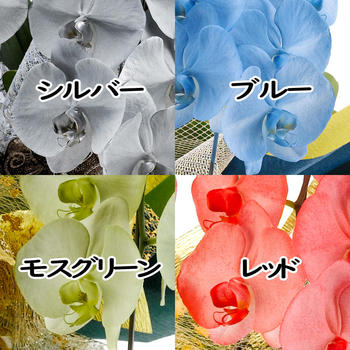 miyabi2.jpg